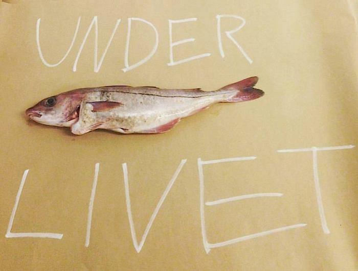 UL fisk